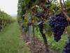 Guide du vin